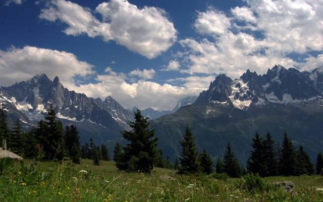 花,草地,阿尔卑斯山,山,上衣,夏天,云,天空,草,森林