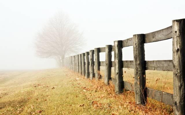 早晨,雾,深秋,树,栅栏,阴霾,孤独,草地