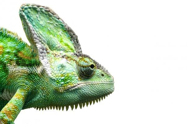 变色蜥蜴HD墙纸特写镜头照片