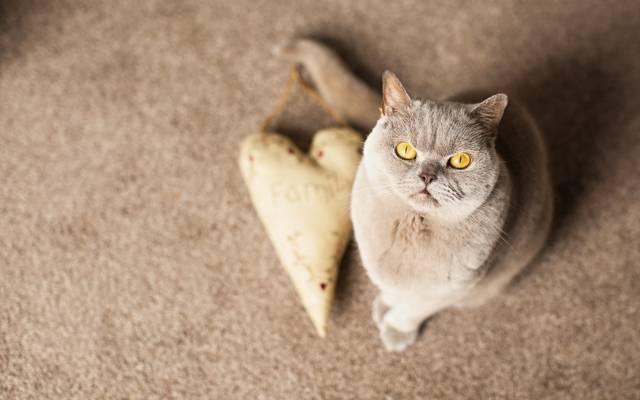 猫,看,背景