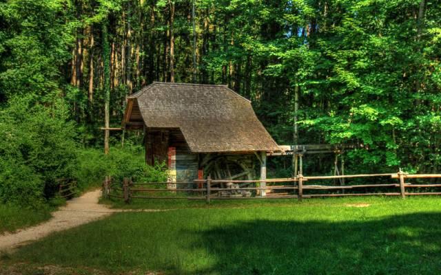 施工,奥地利,建设,树木,林间空地,路径,围栏,格罗斯麦恩,草,森林