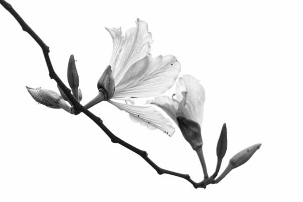 摄影的petaled花高清壁纸