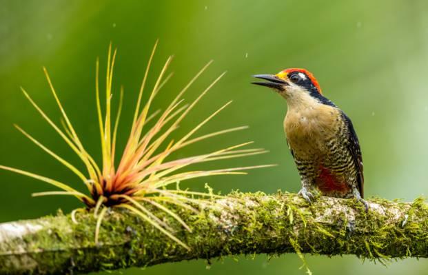 可爱啄木鸟