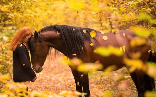 马,女孩,秋天