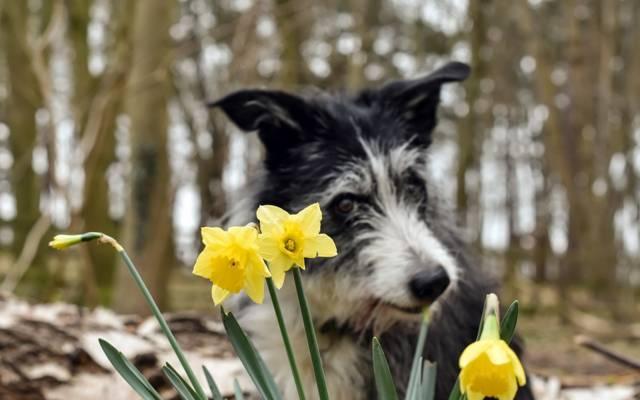 背景,花朵,狗