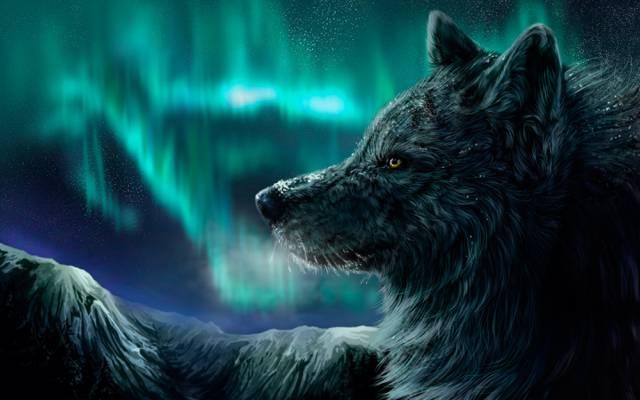 北极光,晚上,山,狼