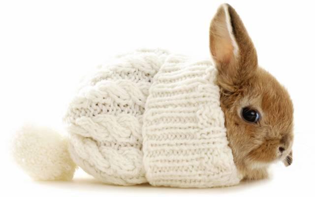 兔子,帽子,冬天