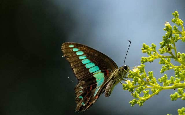 翼,芽,眼睛,茎,翼,茎,蝴蝶,眼睛,蝴蝶,触角,触角,芽