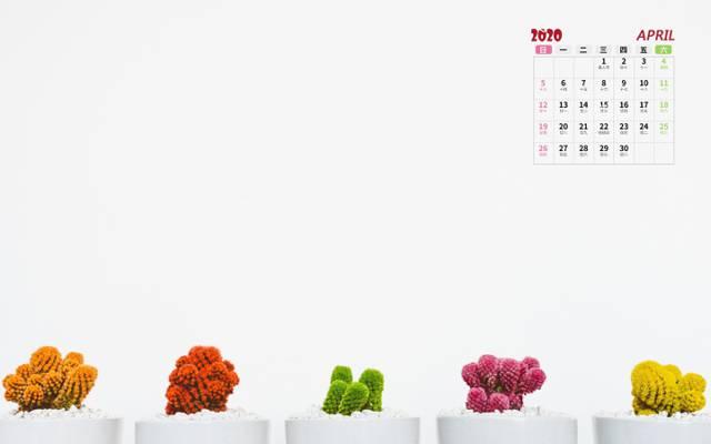 2020年唯美多肉盆栽4月日历