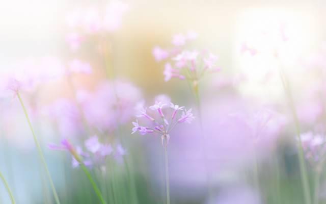鲜花,轻轻,春天,粉红色