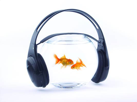 水,黄金,音乐,耳机,水族馆,鱼