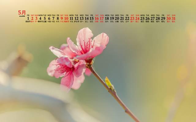 2020年5月小清新唯美粉色花卉日历桌面壁纸