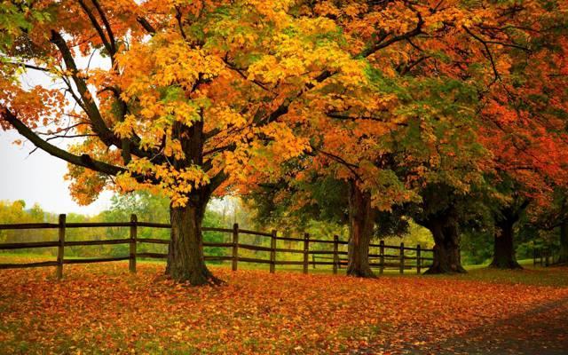 公园,路,叶子,秋天,叶子,路径,颜色,树,步行,秋季,森林,公园,森林,自然,树,...