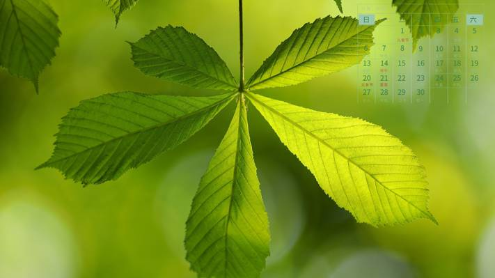 2021年6月小清新绿叶日历