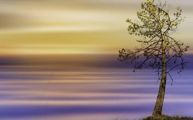 样式,颜色,树,背景