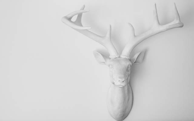 装饰,角,鹿