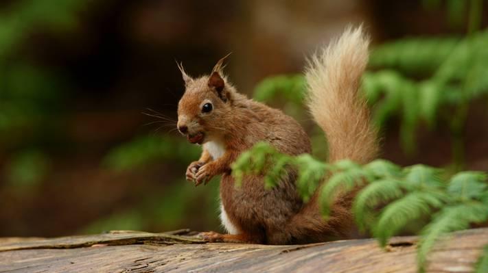 棕色的树干上的棕色松鼠高清壁纸