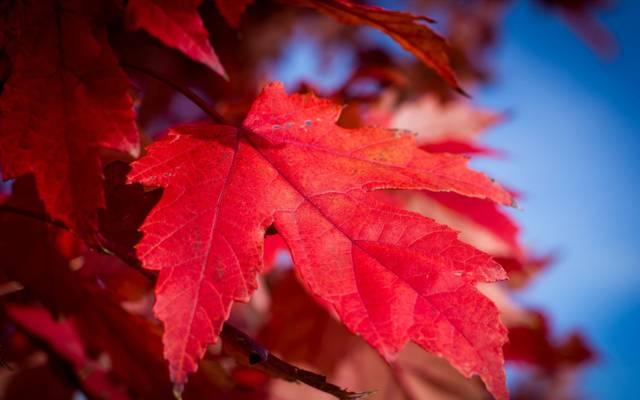 表,油漆,性质,天空,秋天,绯红色