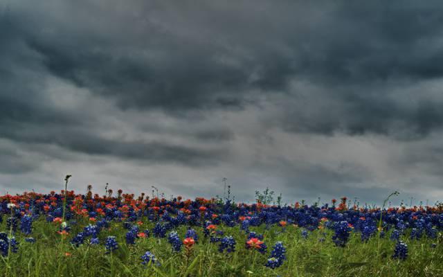 鲜花,草地,人类发展报告,领域,人类发展报告,颜色,颜色,美丽,花,天空,酷,云,酷,云,...