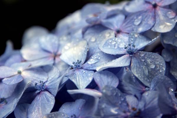 景深摄影的紫色4瓣花高清壁纸