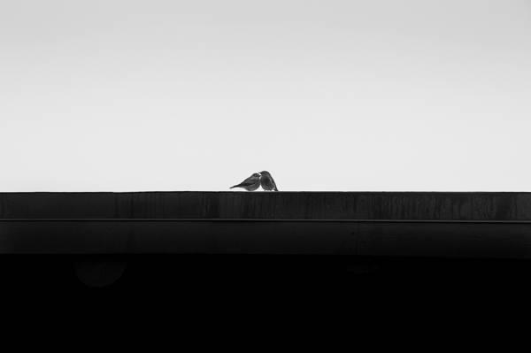 You & Me, background, birds