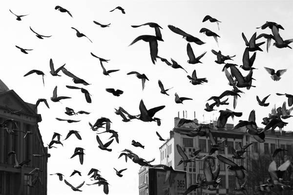 首页,翅膀,包,飞行,建筑,鸽子,鸟