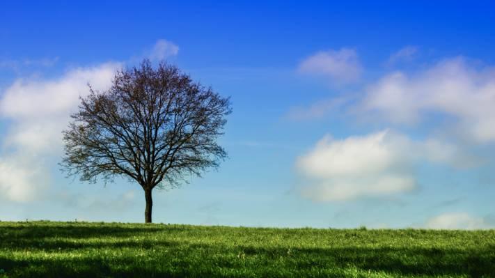棕色光秃秃的树上绿色的田野高清壁纸