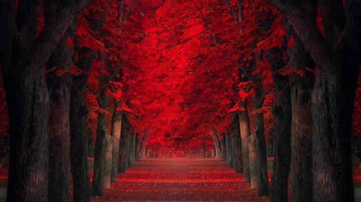 火红的秋天