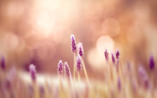 鲜花,宽屏,模糊,高清壁纸,壁纸,绿色,领域,全屏幕,背景,宽屏,花,大自然,...