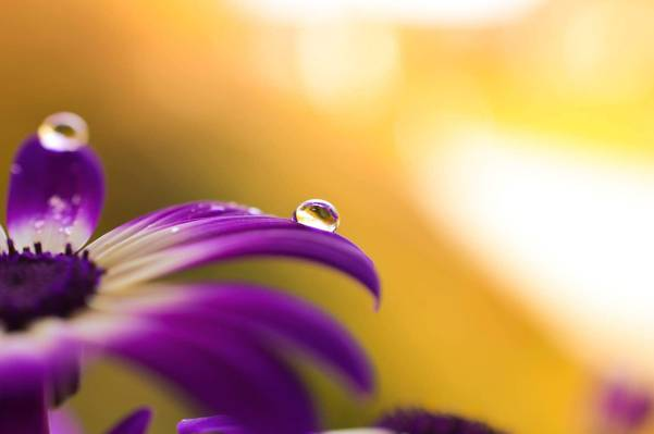 用水紫色花宏观摄影滴下高清壁纸
