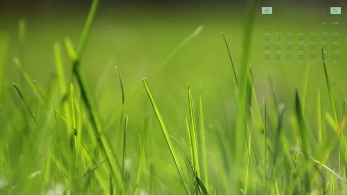 2021年7月清新绿草日历