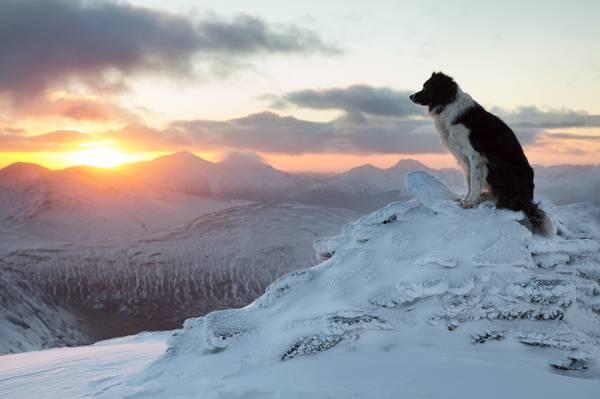 边境牧羊犬,狗,冬天,山,日落