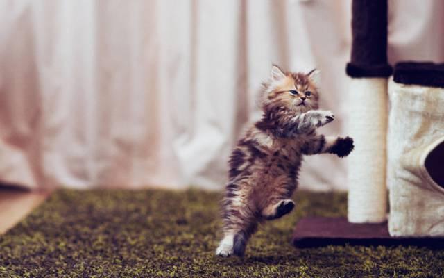 ©Ben Torode,小猫,黛西,跳