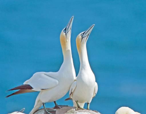 在灰色摇滚高清壁纸之上的两个白色的鸭子旁边