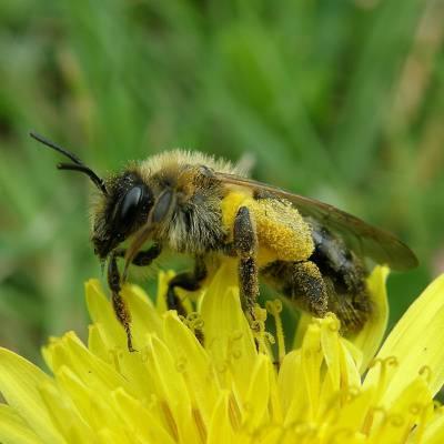 蜜蜂花选择性焦点照片高清壁纸