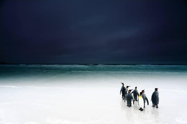 海滩,鸟,天空,企鹅,海洋