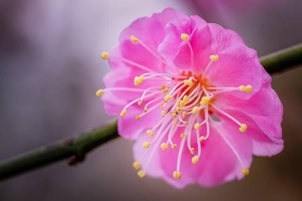 关闭视图粉红色的multipetal花卉高清壁纸