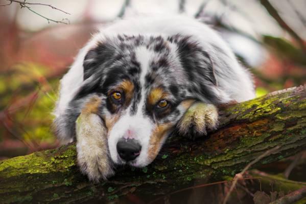 悲伤,看,狗