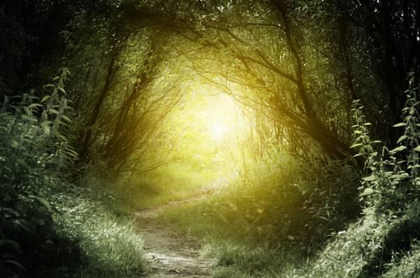 路径,绿色,自然,太阳,树,草,森林