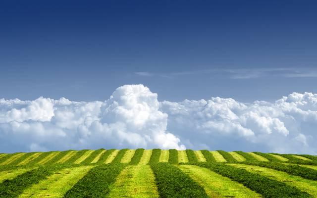 夏天,天空,草地,田野,云彩