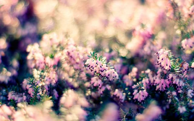 散景,宏,光,植物,性质