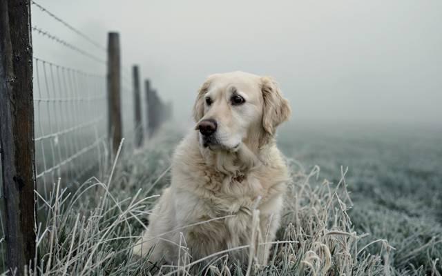 狗,看,篱笆,每个