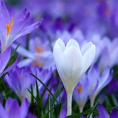 景深摄影的白色花朵高清壁纸