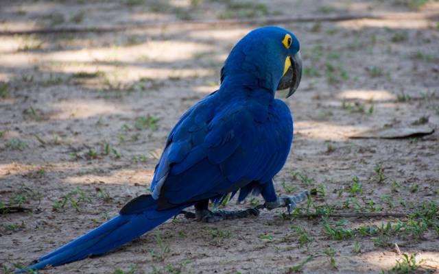 羽毛,油漆,尾巴,鸟,喙,鹦鹉