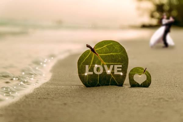 爱绿色的叶子上海滩高清壁纸