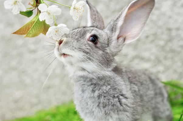 MUZZLE,灰色,兔子,耳朵,分支,MUSTACHE