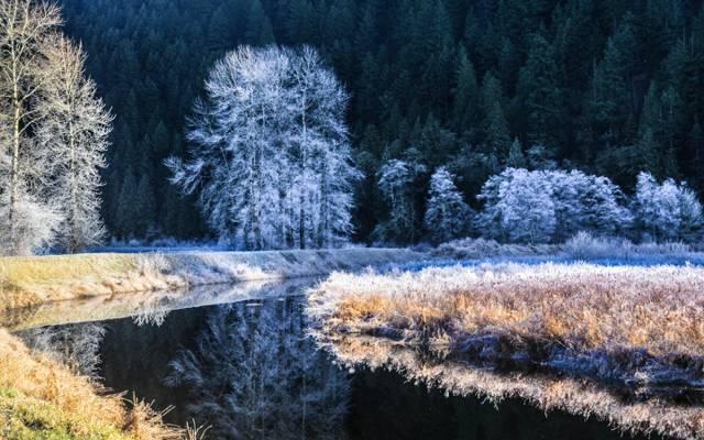 弗罗斯特,树木,河,冬天