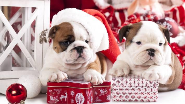 喜庆狗狗祝你圣诞节快乐