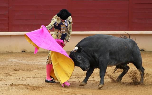 斗牛士,韩国公牛