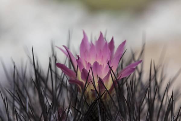 紫色pallled花高清壁纸的焦点照片
